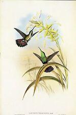 "1990 Vintage HUMMINGBIRD #184 /""COLUMBIAN THORN BILL/"" LOVELY GOULD Art Lithograph"