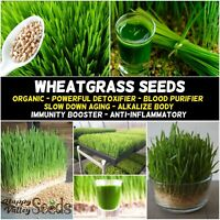 WHEATGRASS SEEDS 400g-2kg UNTREATED wheat grass SPROUT garden sprouting sprouts