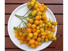 TOMATO ILDI (25 SEEDS) Yellow grape Tomato!