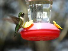WOW! Humming Bird Feeder From Garden Collection!  Great Price!