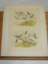 1878 Antique Studer Color Bird Print/Flycatcher,Vireo/5 Types,Finch,Hummingbird