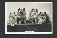 PATTREIOUEX (OTHER) - DOGS - #46 POMERANIANS