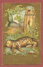 A.B.Seeley, American Trade card ,Weary Cat, 1881,  qb921