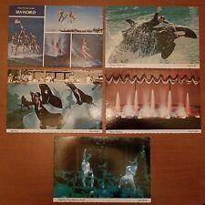 Rare 1970s Scalloped Sea World Vintage Postcards Aurora Orlando San Diego Shamu