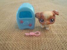 Littlest Pet Shop Pet & Accessories Brown White Poodle Dog #37 w/ Mailbox A86