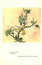 Publicité ancienne pharmaceutique no 2 Hu Yueh Tsung porte bonheur l'art chinois