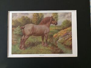 Belgian Horse Print -1923 National Geographic - By Edward Miner - MATTED