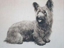 Skye Silky Yorkshire Terrier Original Etching Eberhardt Signed 14x16
