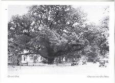 "*Postcard-""Grant Oak"" (Gen. Grant Met Commanders) *Oxford & Ole MS  (#236)"