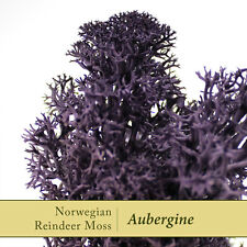 Dried Reindeer Moss | Aubergine Purple - Perfect for air plants & Crafts