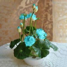 Light Blue Water Lily Bowl Lotus Seeds (2pcs)