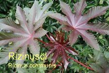 ***100ml kaltgepr. Rizinusöl, nativ, (Ricinus communis)