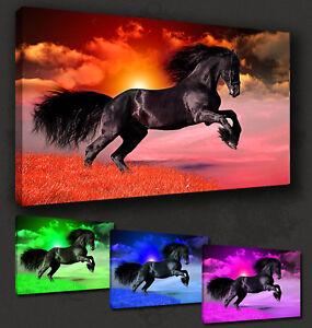 BEAUTIFUL SUNSET HORSE LANDSCAPE MANY COLOURS BOX CANVAS PRINT ART PICTURE