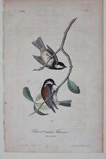 AUDUBON'S BIRDS of AMERICA - CHESTNUT BACKED TITMOUSE - First Edition Octavo 129