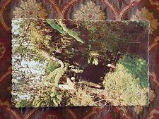 Vintage Postcard Thurston Lava Tube, Hawaii Volcanoes National Park, Hawaii