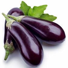 BERENJENA BLACK BEAUTY ( eggplant ) 400 Semillas Seeds