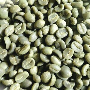 Fresh Green Coffee Beans, 1 lb Kenya AA Nyeri Specialty Bourbon, Raw Unroasted