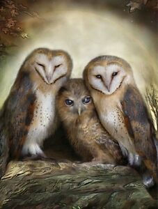 3D Lenticular Picture  Group of owls size 39 x 29cm