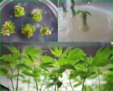 Gamborg Medium (B5), 10g Dehydrated Medium Powder, to make 3000 ml (essential me