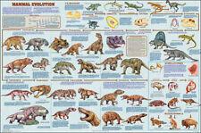 Mammal Evolution Educational Science Teacher Classroom Chart Print Poster 24x36