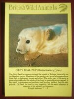 POSTCARD E2-7 ANIMALS GREY SEAL PUP BRITISH WILD ANIMALS