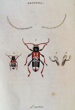 W. WOOD - LEPTURA - ORIGINAL COPPER PLATE ENGRAVING 1842 - REE SHIP IN US !!!