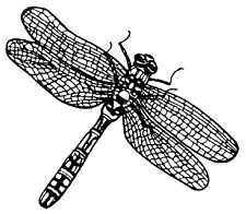 Mounted Rubber Stamps, Dragonfly, Dragonflies, Dragonfly Stamps, Nature Stamps