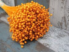 """100 STEMS DRIED FLAX FOR FLOWER ARRANGING READY TO USE ORANGE COLOUR HARVEST 18"""""""