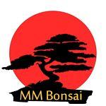 MM Bonsai