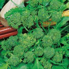 Br/ócoli Sebastian variedad temprana para la primavera y el otono semilla