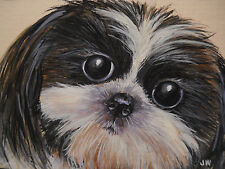 ACEO  Shih Tzu dog animal Black White Brindle print