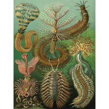 NATURE ART BIOLOGY FERN ERNST HAECKEL GERMANY VINTAGE ADVERTISING POSTER 1779PY