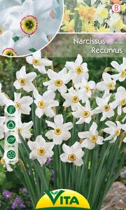 Nr. 191- Poetaz-Narzissen 'Recurvus', Höhe ca. 45cm, Gr.12/14, 10 Blumenzwiebeln