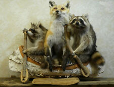 Noah's Ark- Two Raccoons One Fox Professional Taxidermy Mounted Animal Statue