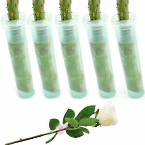 Flora Single Stem Tubes Water Pick Ideal For Keeping Fresh Single Flowers