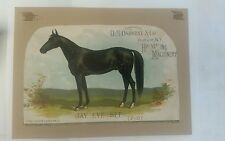 Vintage  1887 Advertising print with Race Horse art equine history