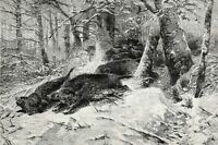 Boars Fighting, Singular of Wild Swine Stampedes, Large 1880s Antique Print