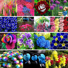 10-1000 Graines rose semer fleur plante jardin flower seeds multicolore rainbow
