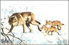 Loup gris commun Canis lupus Eurasian Wolf AUTOCOLLANT STICKERS IMAGE ANNEES 60s