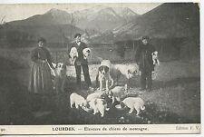 POSTCARD / CARTE POSTALE / LOURDES ELEVEURS DE CHIENS DE MONTAGNE