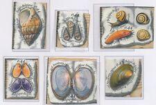 Belgium**SHELLFISH&SHELLS-6vals-2005-Clams-MUSSELS-Snails-Coquillages-Schelpen