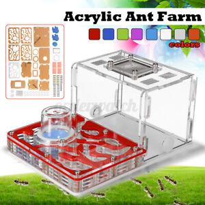Acrylic Ant Nest Formicarium Housing Ant Farm House Ant Colony Living Feeding