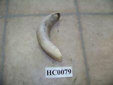Cow horn unique curve for blow horn powder keg Hc0079
