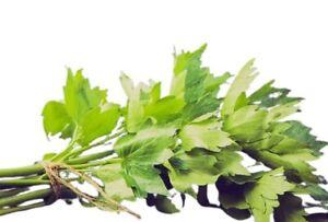 LOVAGE 50 seeds (Levisticum Officinalis) Lubczyk Nasiona