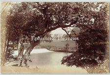 Chatsworth House, Derbyshire - Superb 1880s Albumen Photograph. Forest. Trees