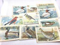 Lot Of 10 Victorian Trading Cards Dwight's Soda Church's Arm & Hammer Birds