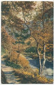 Untitled scene, river in valley, 1917 postcard