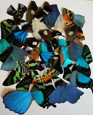 50 pieces assorted Real butterfly wings