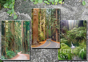 California redwood trees forest roads photos CA, 3 5x7s or request digital on CD