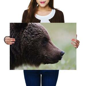 A2 | Wild Brown Bear Canada Animal - Size A2 Poster Print Photo Art Gift #14176
